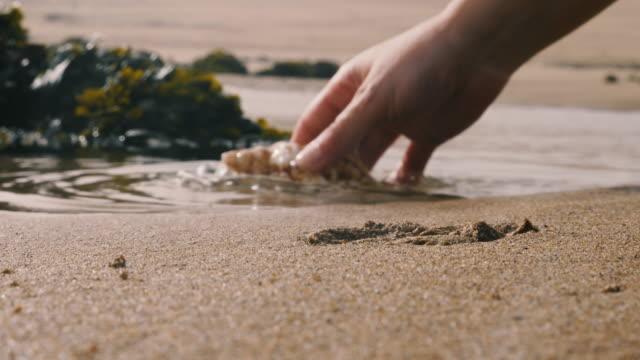 vidéos et rushes de coquille de mer dans le sable, une main de femme le ramasse et le lave dans l'eau. - coquille et coquillage
