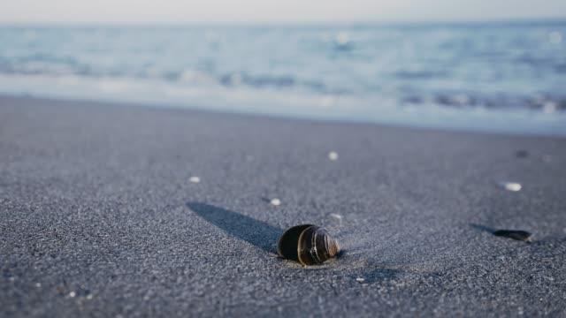 vídeos de stock e filmes b-roll de sea shell on a sunset beach - bugio