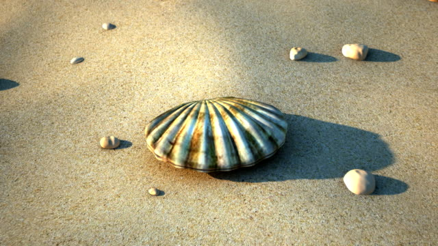 Sea Shell A sea shell opening with a pearl inside. animal shell stock videos & royalty-free footage