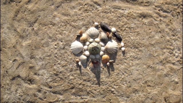 stockvideo's en b-roll-footage met zee schelpen patroon mandala verschijnt op een zand. stop motion animatie - mandala