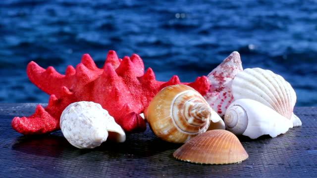 vídeos de stock e filmes b-roll de conchas do mar - bugio