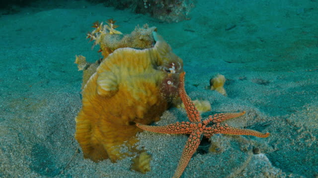 Sea star and coral colony video