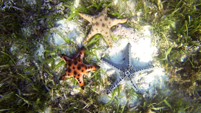 Sea star video