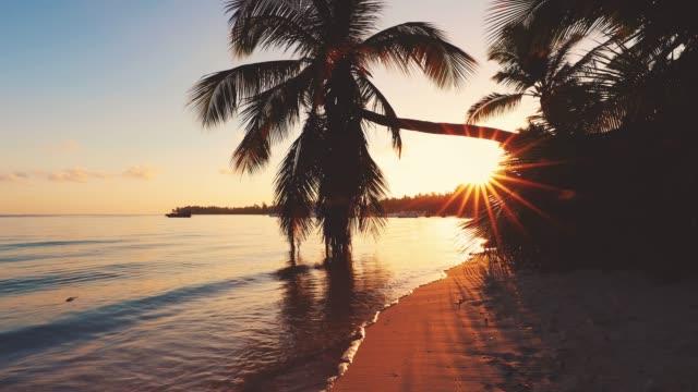 vídeos y material grabado en eventos de stock de amanecer en la exótica playa de la isla y palmeras de coco. vacaciones de verano. - caribe