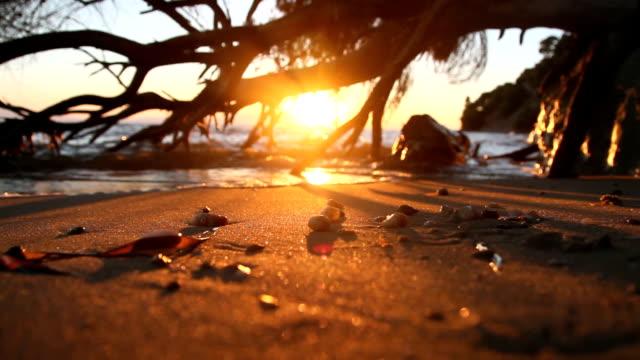 sea sunset tree sea sunset tree south carolina stock videos & royalty-free footage
