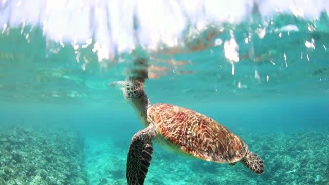 透き通った海の水の中で空気が出てくるウミガメ - 海洋生物点の映像素材/bロール