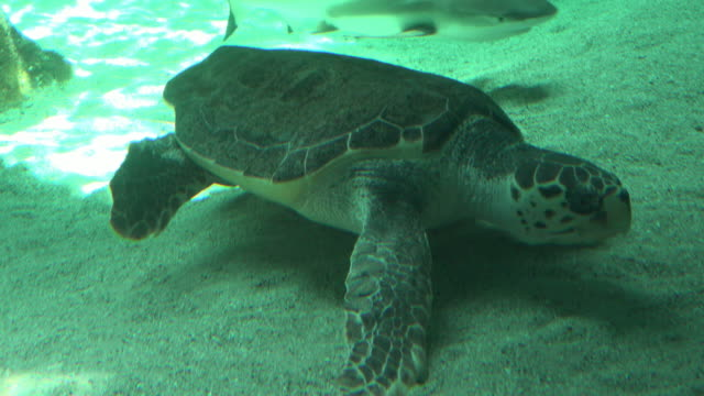 Sea Turtle Resting On Seabed Sea Turtle Resting On Seabed tortoise shell stock videos & royalty-free footage
