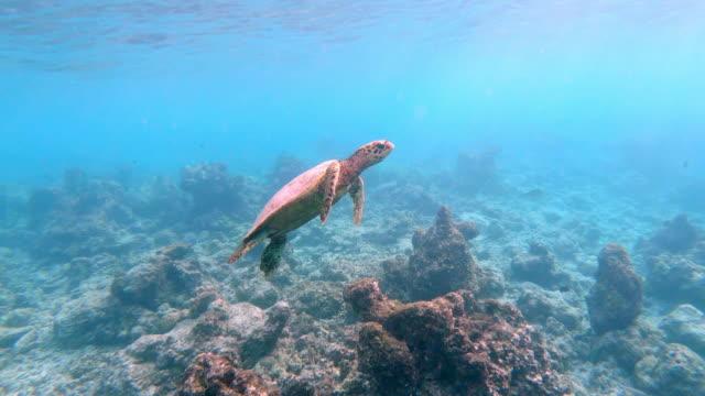 Sea turtle swimming in the sea video