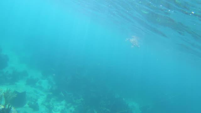 stockvideo's en b-roll-footage met zeeschildpad onderwater oppervlakte voor lucht in turken en caicos - providenciales