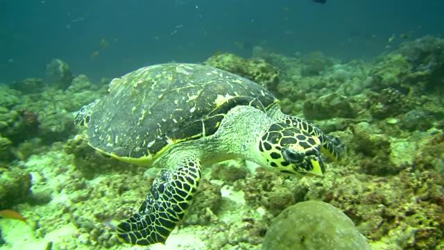 cu meeresschildkröte - süßwasserfisch stock-videos und b-roll-filmmaterial