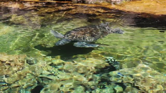 sea turtles swimming - побережье мексиканского залива сша стоковые видео и кадры b-roll