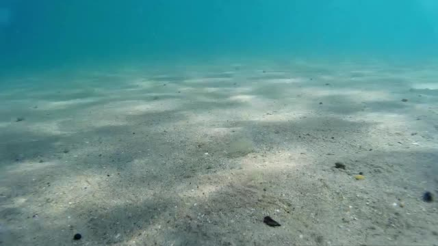 Sea under water, sandy bottom. Sea under water, sandy bottom. shallow stock videos & royalty-free footage