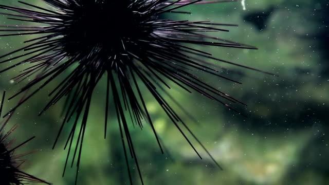 ウニ - 尖っている点の映像素材/bロール
