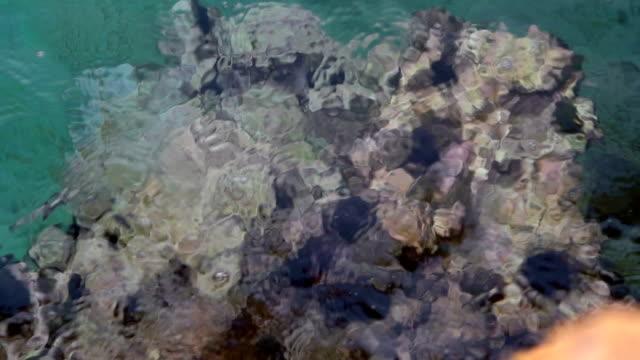 stockvideo's en b-roll-footage met zee-egels - dierlijk bot