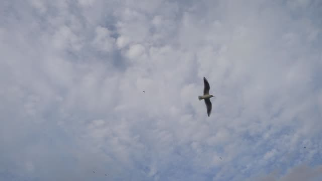 Seabirds Swimming and Flying on The Sea Slow Motion