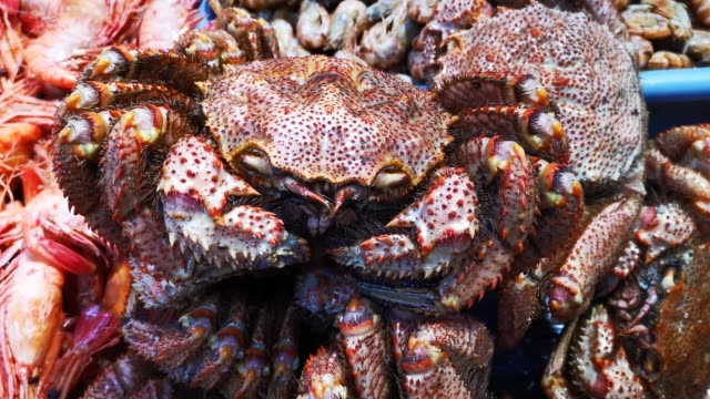 Seafood in the window of the market. Crab hairy closeup.