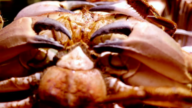 Seafood. Moving crabs at the La Boqueria food market, Barcelona, Spain video