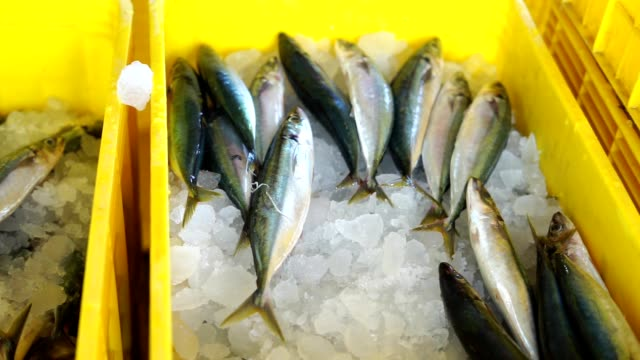 seafood vendor packing fresh sardines with ice at fish market - banchi di pesci video stock e b–roll