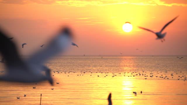 Seagull and sunset