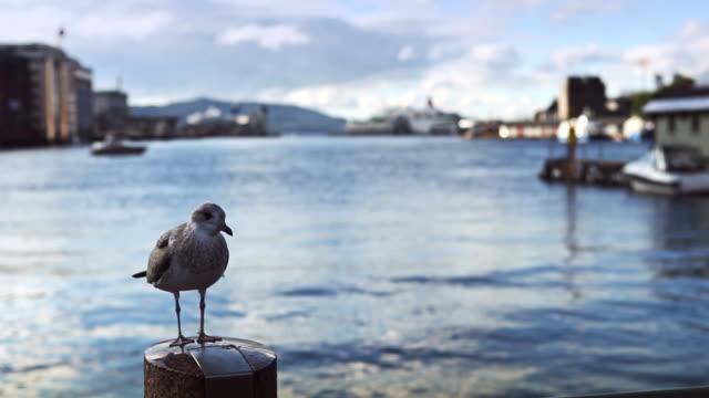 vídeos y material grabado en eventos de stock de gaviota en el puerto en bergen - bergen