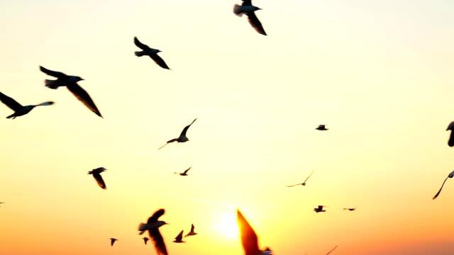 uccello gabbiano che vola al rallentatore con il tramonto. - battere le ali video stock e b–roll