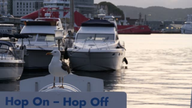 vídeos y material grabado en eventos de stock de pájaro gaviota sentado en un barco en la ciudad de bergen, noruega - bergen