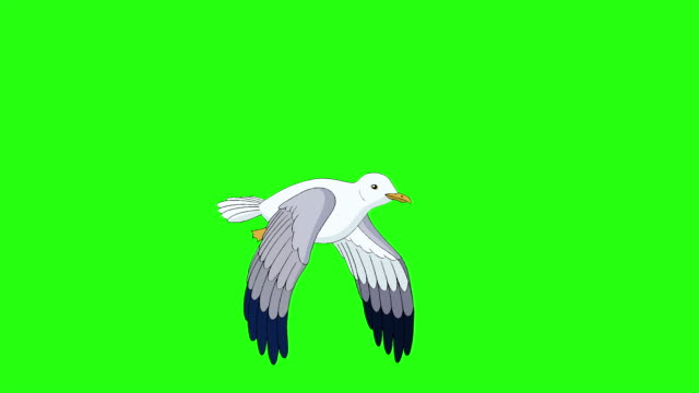 Seagull flies and soars in the sky chroma key