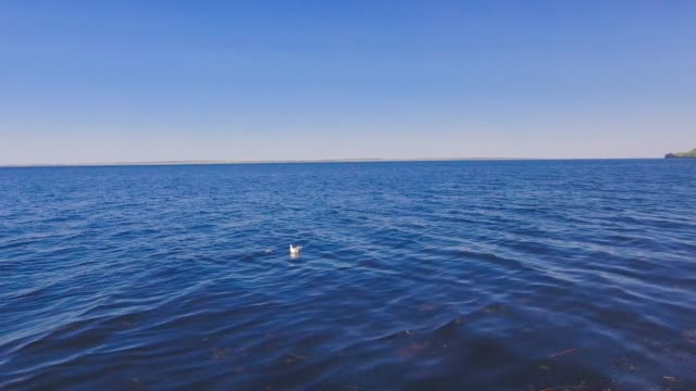 A Seagull flies over the water A Seagull flies over the water quadcopter stock videos & royalty-free footage
