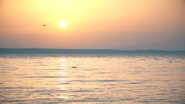 vídeos de stock e filmes b-roll de seagull flies over water in slow motion at dusk - linha do horizonte sobre água