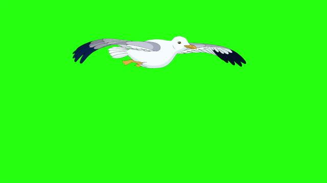 Seagull flies up into the sky chroma key