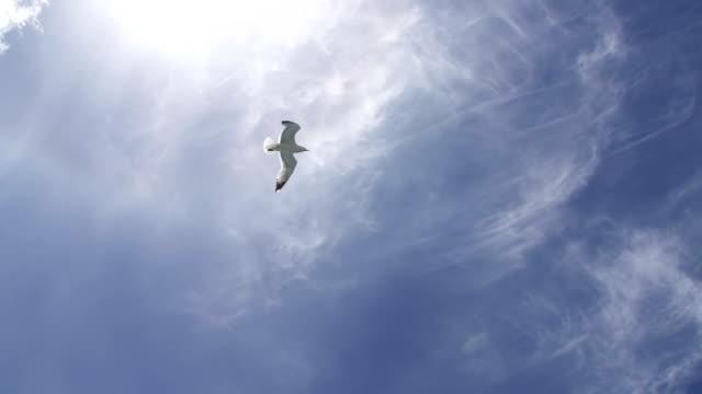 Seagull flying across the sky