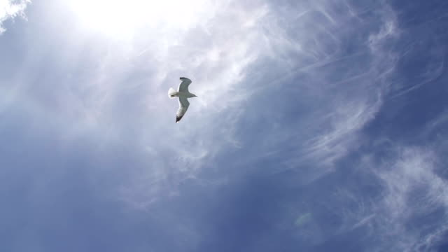 Seagull flying across the sky video