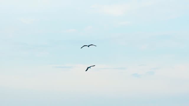 空を飛ぶカモメ - 鳥点の映像素材/bロール
