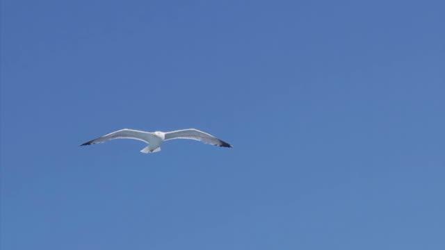 Seagull お越しの際は、ブルースカイ ビデオ