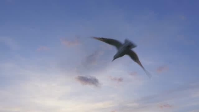 Möwe fliegen In den Himmel – Video