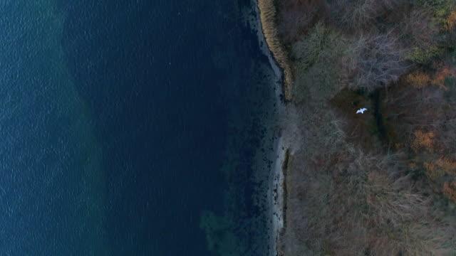 gabbiano che sorvola la costa. danimarca - costa caratteristica costiera video stock e b–roll