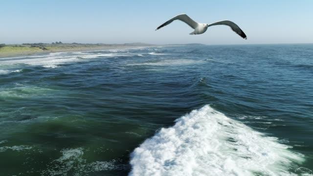 Seagull flying over ocean waves