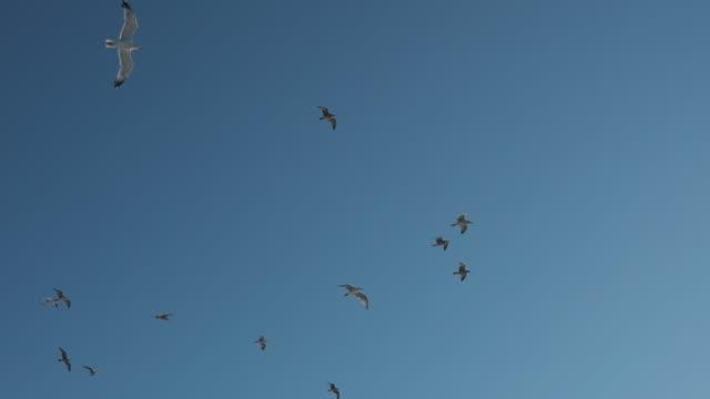 カモメ飛行スローモーション - 鳥点の映像素材/bロール