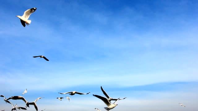 Seagull 飛ぶ ビデオ