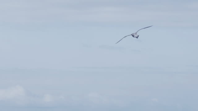 seagull flying - inghilterra sud orientale video stock e b–roll