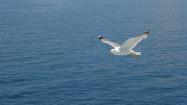 Seagull gliding above sea, ocean. Travel trends. Two seagulls soaring in blue sky. Soaring Seagull in the Sky. Seagull soars slowly using headwind against the backdrop of a clear sky