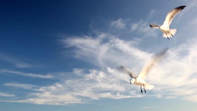 Seagull in blue sky video