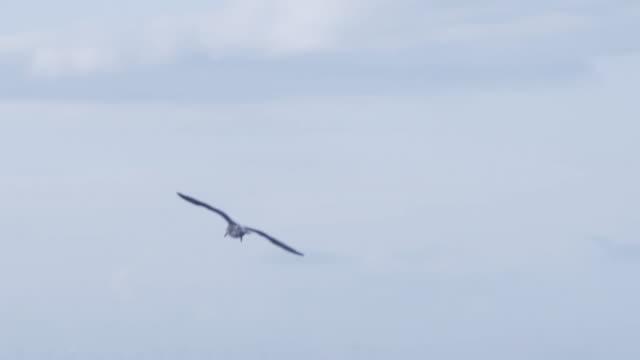 seagull in slowmotion - inghilterra sud orientale video stock e b–roll