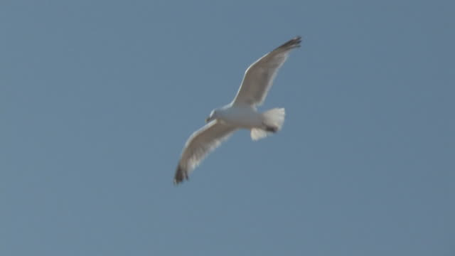 Seagull in the sky 4 - HD 30F  animal limb stock videos & royalty-free footage