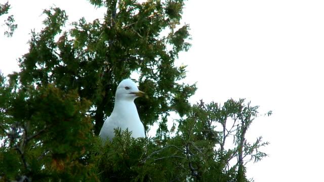 seagull の木 - 水鳥点の映像素材/bロール