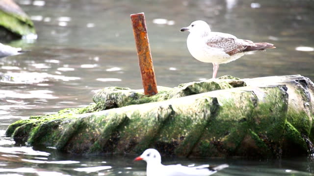 Seagull on dirty tire in polluted water video