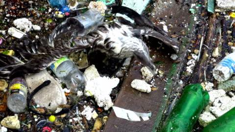 vídeos de stock e filmes b-roll de a seagull on the dirty polluted sea - mar