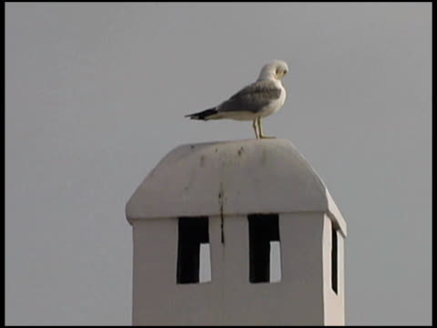 Seagull on Top of Tower Seagull on Top of Tower.  SD 4:3 NTSC 720 x 486 with 29.97 fps. Natural background audio. water bird stock videos & royalty-free footage