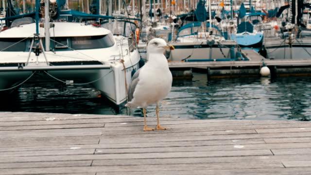 ahşap iskelesi ispanian bay martı oturur - dalgakıran stok videoları ve detay görüntü çekimi