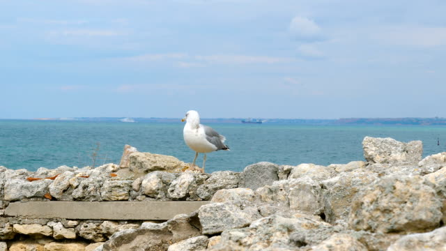 A seagull stands on a stone wall near the sea.